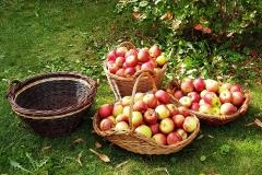 Äpfelkörbe